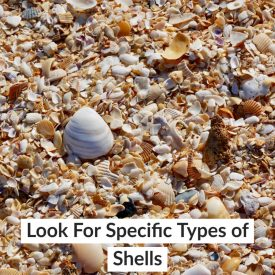 Look For Specific Types of Shells
