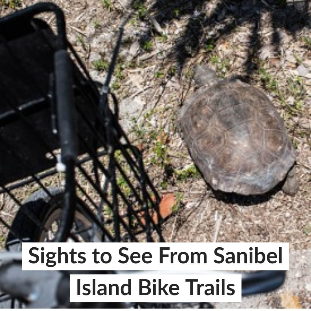 Sights to See From Sanibel Island Bike Trails
