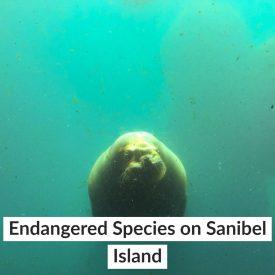Endangered Species on Sanibel Island