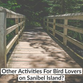Other Activities For Bird Lovers on Sanibel Island