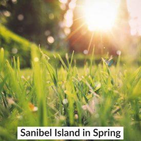 Sanibel Island in Spring
