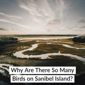 Why Are There So Many Birds on Sanibel Island