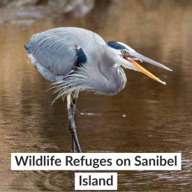 Wildlife Refuges on Sanibel Island